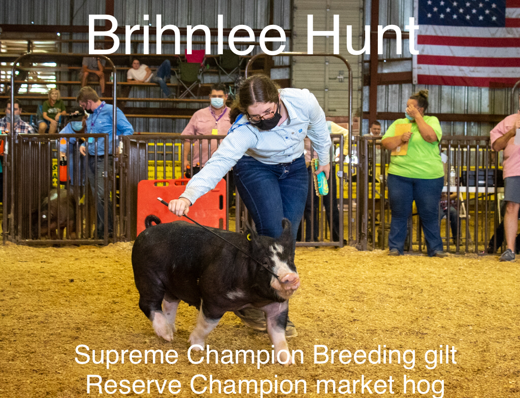 Student at fair showing hog