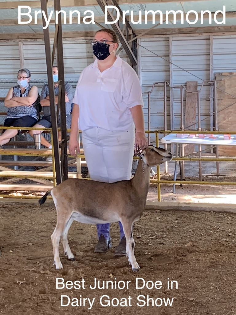 Student at fair showing goat